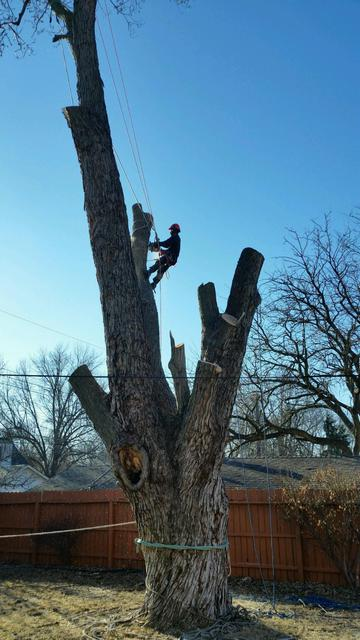 Tree Removal Omaha Nebraska