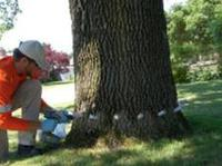 Tree Health Care Omaha, Nebraska
